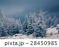 Christmas background with snowy fir trees  28450985