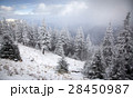 Christmas background with snowy fir trees  28450987