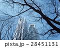 冬 街路樹 新宿の写真 28451131