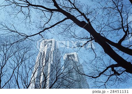 東京、新宿、冬の街路樹 28451131