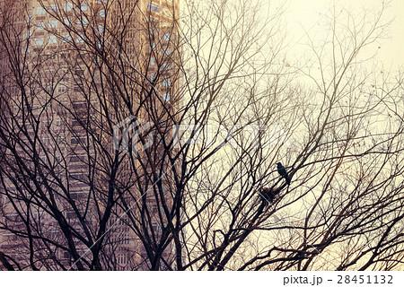 東京、からすの巣 28451132