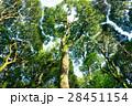常緑樹、クスノキ、 エコロジーイメージ 28451154