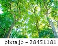 常緑樹、 エコロジーイメージ 28451181