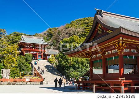 鎌倉 鶴岡八幡宮 本宮と舞殿 28456139