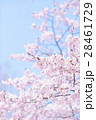 青空と桜(ハイキー) 28461729