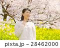 桜 女性 菜の花の写真 28462000