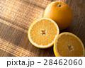 八朔 カット 柑橘類の写真 28462060