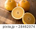 八朔 カット 柑橘類の写真 28462074