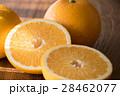 八朔 カット 柑橘類の写真 28462077