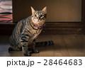 猫 28464683