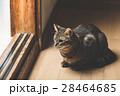 猫 28464685