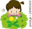 たんぽぽ 子供 花のイラスト 28465423