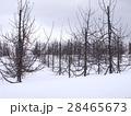 冬のりんご畑 28465673