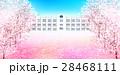 桜 学校 桜の花のイラスト 28468111