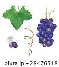 Grapes. A set of elements. 28476518