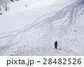 雪原を歩く 28482526
