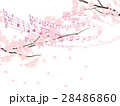 ソメイヨシノ 28486860