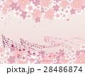 桜並木 28486874