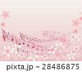桜並木 28486875