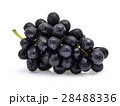 Black grapes with drop of water isolated on white 28488336