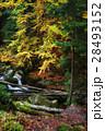 小川 川 樹木の写真 28493152