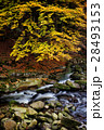 小川 森林 林の写真 28493153