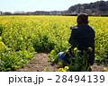菜の花と男性 28494139