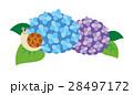 紫陽花 あじさい 花のイラスト 28497172