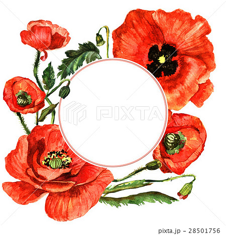 Wildflower poppy flower frame in a watercolor 28501756