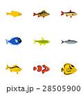 サカナ 魚 魚類のイラスト 28505900