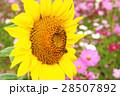 花海 28507892