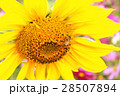 花海 28507894