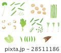 春野菜セット <ばらばらの野菜>  28511186