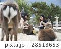 宮島 女子旅 観光 鹿 28513653