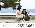 宮島 女子旅 観光 鹿 28513661