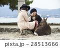宮島 女子旅 観光 鹿 28513666