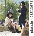 宮島 女子旅 観光 鹿 28513673