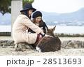 宮島 女子旅 観光 鹿 28513693