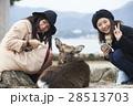 宮島 女子旅 観光 鹿 28513703