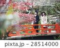 宮島 紅葉谷公園 もみじ橋を渡る女性  28514000