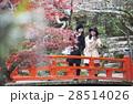 宮島 紅葉谷公園 もみじ橋を渡る女性  28514026