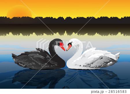 couple swan at peaceful lake 28516583