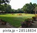 公園の夏の朝 28518834