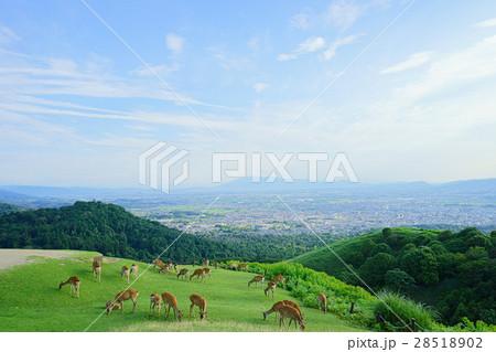 奈良・若草山山上の眺望 28518902