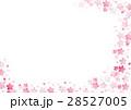 桜 さくら サクラのイラスト 28527005