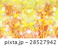 Spring background with yellow dandelions 28527942