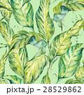 葉 トロピカル 熱帯のイラスト 28529862