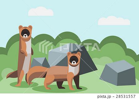 動物 いたち イタチのイラスト素材 28531557 Pixta