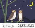 鳥 ふくろう フクロウのイラスト 28531583