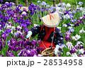 花菖蒲が満開のせせらぎ公園の花摘み娘 28534958
